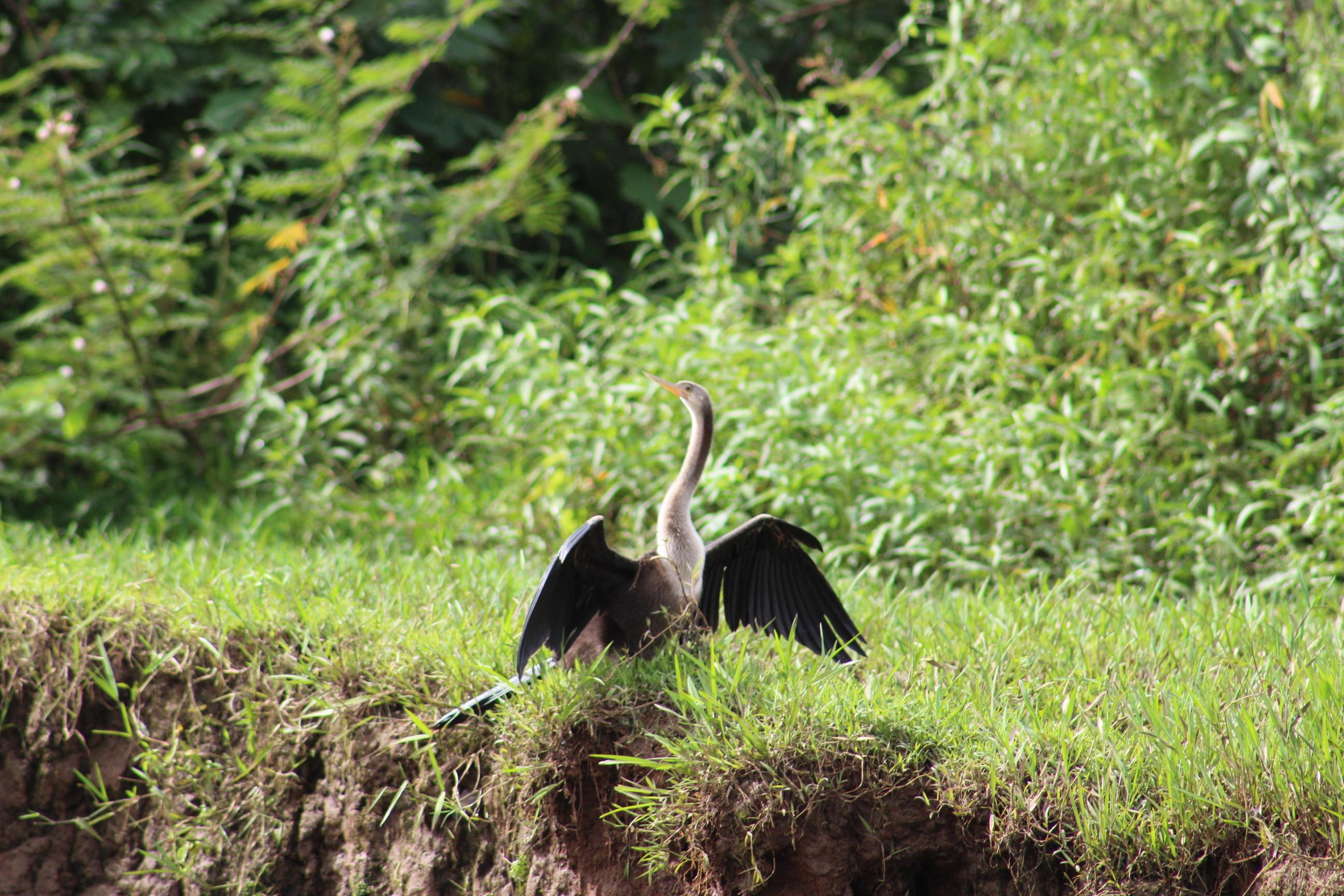 CAÑO NEGRO. Una forma de ponerle alas a un paraíso.