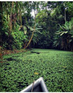 DÍA 2. Santuario de los Perezosos en el Caribe.